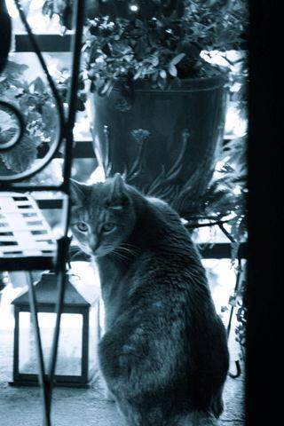 Kitties-2