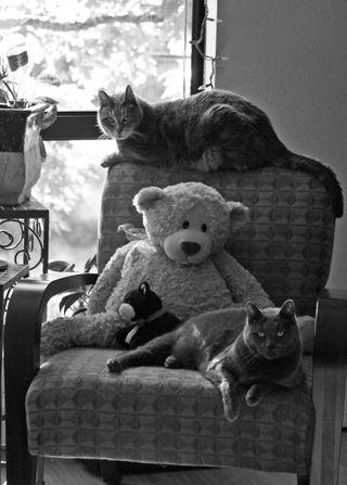 Kitties-4