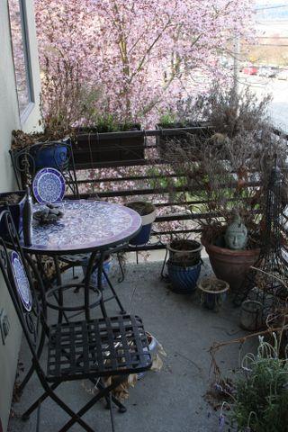 Before Garden